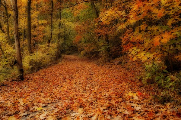 Delicious Autumn by Elena Bouvier